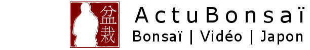 ActuBonsaï