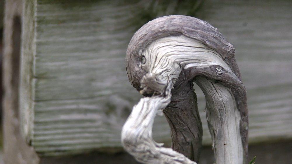 shojuen kinashi nursery pepiniere bonsai