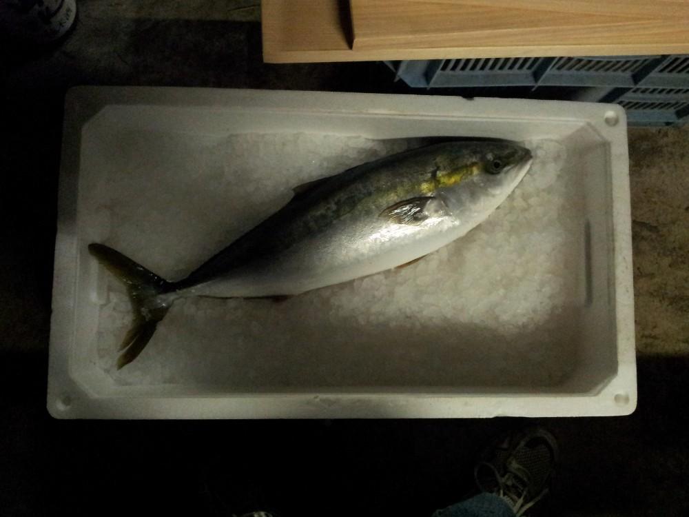 Un poisson bien frais pour les sashimi