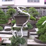 juniperus rigida kengai - shojuen - keiji kandaka