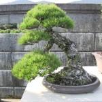 Visite à shojuen – Kandaka