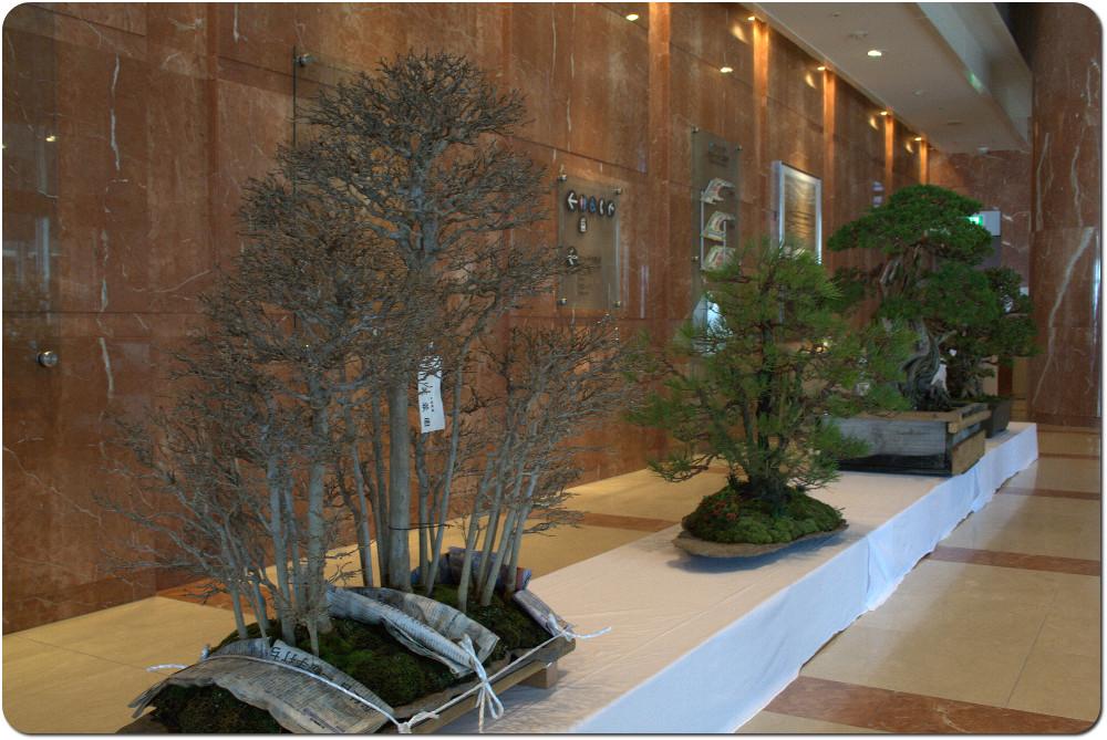 Bonsaï in Japan - update 21janv12 : video demonstration ASPAC Aspac-demonstration-tree-08