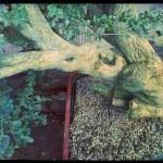 détail du tronc et de l'écorce craquelée