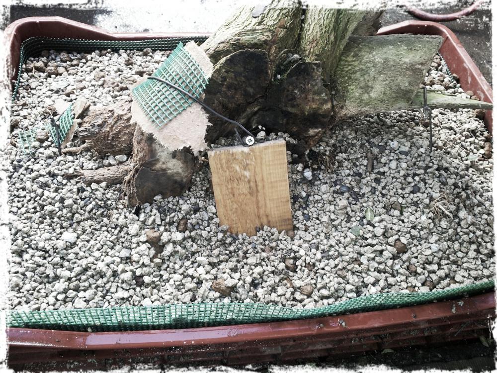 Détail de la fixation de l'arbre : cale en bois et fil de fer recuit