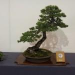 Exposition bonsaï : trophée des 4 frontières 2012