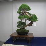 Revue du web bonsaï – août 2012 n°1