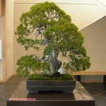 Web bonsai review #7 – september 2012