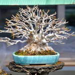 Revue du bonsai web – septembre 2012 n°6