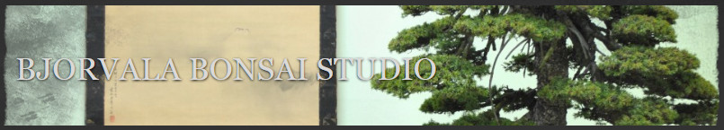 bjorvala bonsai studio