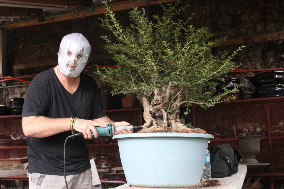 bonsai mexicain