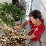 chee peng tan - si diao - juniperus 01