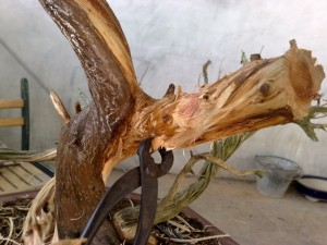 chee peng tan - si diao - juniperus 06