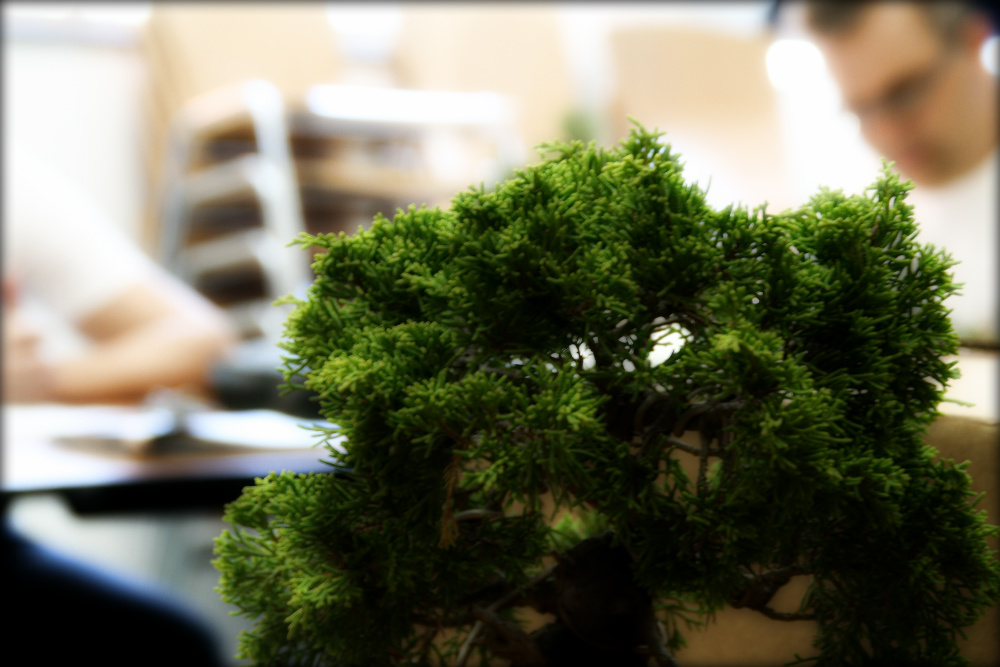 Rentr e du club de bonsai strasbourg - Video bonsai jardin japonais ...