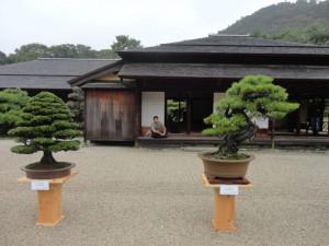 nipoweb bonsai 01