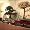 FFB bonsai sélection régionale EST 2012