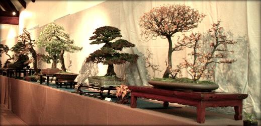 FFB-bonsai-sélection-régionale-EST-2012-519x250