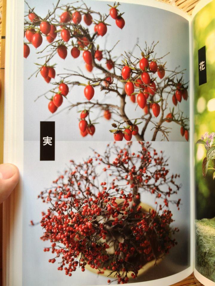 Junsun Yamamoto book