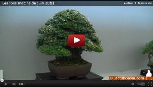Les jolis matins de juin 2011 - arbre exposé