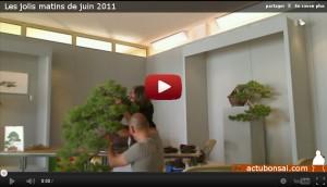 Les jolis matins de juin 2011 - demonstration - juniperus kengai