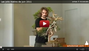 Les jolis matins de juin 2011 - demonstration - juniperus sabina sebastien rouzot