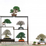 National bonsai association of taiwan