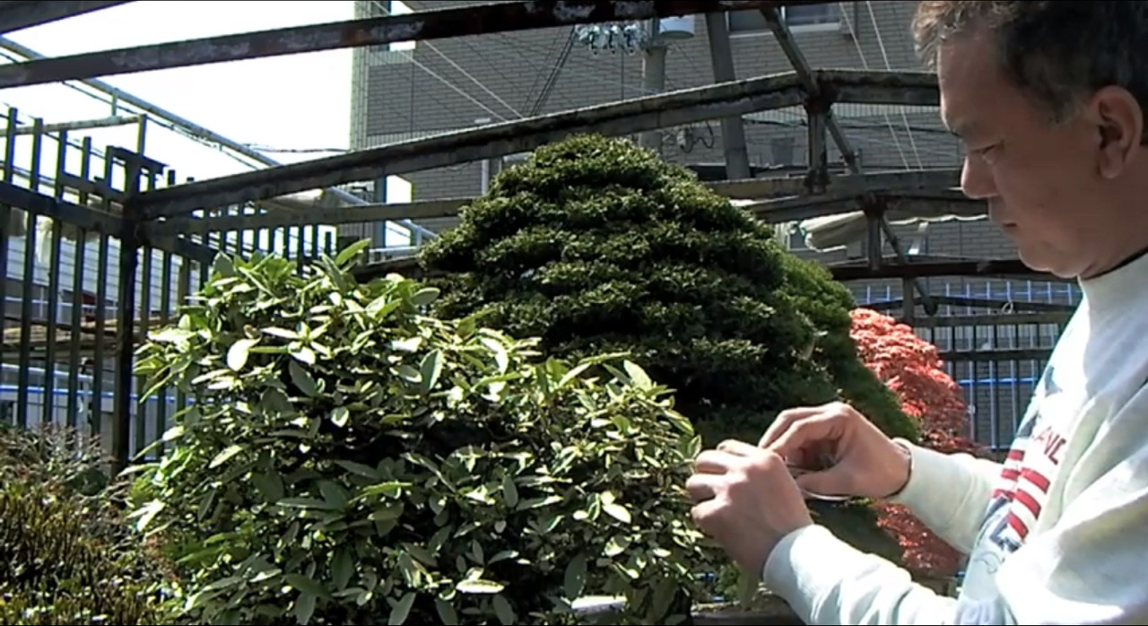 apprendre les bases du bonsai avec un maitre japonais - the bonsai art of japan