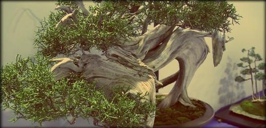 http://actubonsai.com/wp-content/uploads/2012/10/atelier-17-novembre-ascap-519x250.jpg