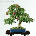 bonsai art museum