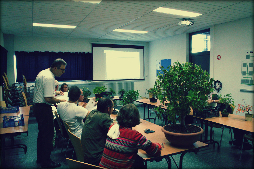 6 octobre 2012 club des amis du jardin japonais actubonsai for 6 jardin guillaume bouzignac
