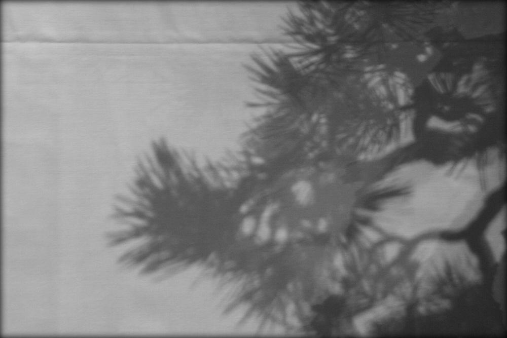 ombre de pin