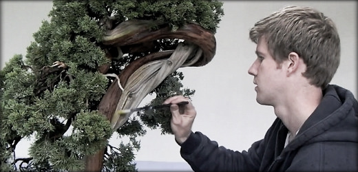 the bonsai art of japan episode 3