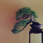 Revue du bonsai web – octobre 2012 n°9