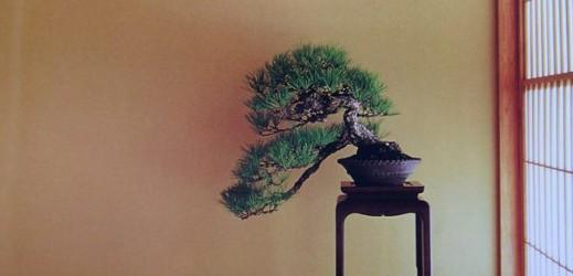 http://actubonsai.com/wp-content/uploads/2012/10/une-web-review-9-519x250.jpg
