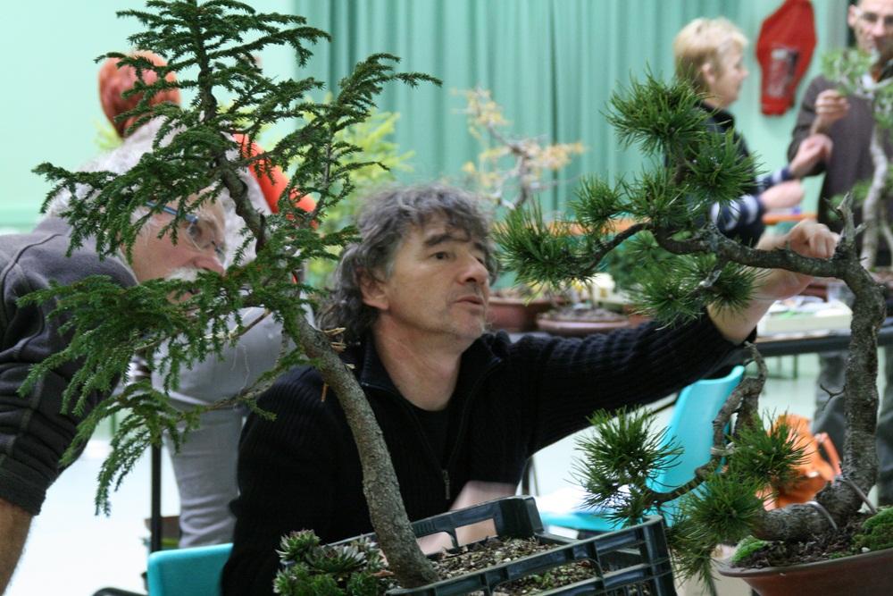 http://actubonsai.com/wp-content/uploads/2012/11/atelier-ascap-2012-29.jpg