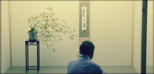 http://actubonsai.com/wp-content/uploads/2012/11/header-bonsai-web-11-519x250.jpg