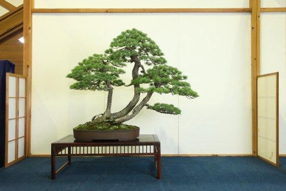 Hanyu Uchikutei - Exhibition1