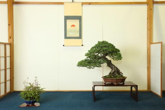 Hanyu Uchikutei - Exhibition6