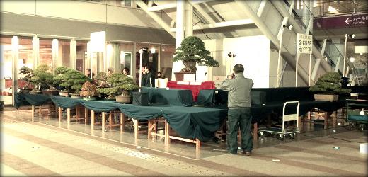 S-CUBE bonsai ASPAC 2011