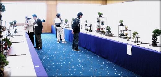 http://actubonsai.com/wp-content/uploads/2012/12/header-kyushu-miyabi-review13-519x250.jpg