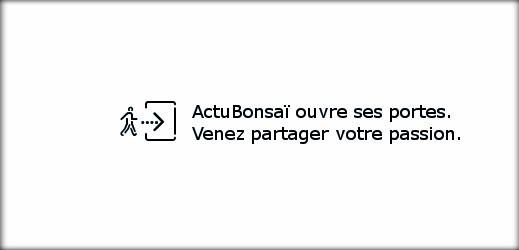 http://actubonsai.com/wp-content/uploads/2012/12/header-multi-auteur-519x250.jpg