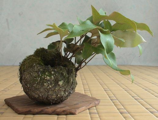 shitakusa fougere kokufu ten