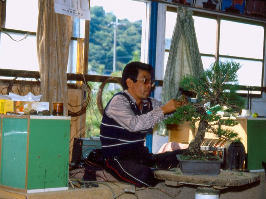 Kuniaki Hiramatsu - archive shikoku bonsaï