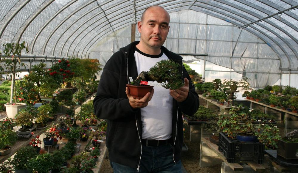 La serre à shohin avec Jerome Cologne - matsu bonsai