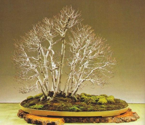 Une superbe forêt de bonsai.