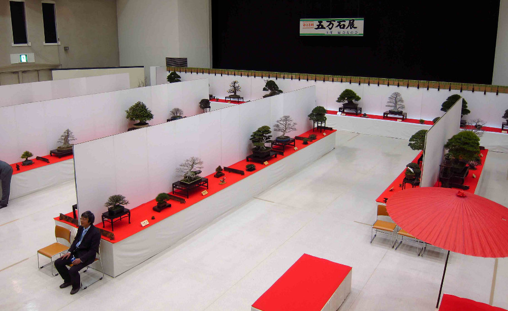 gomangoku bonsai exhibition 13