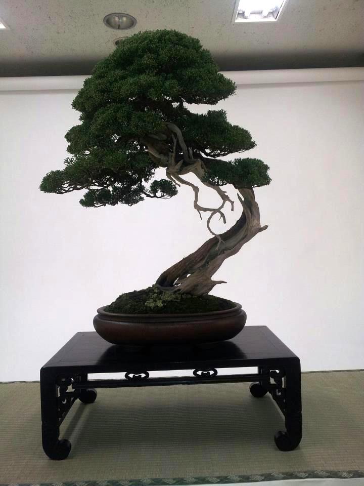 kokufu-ten 2013 - isao omachi 02