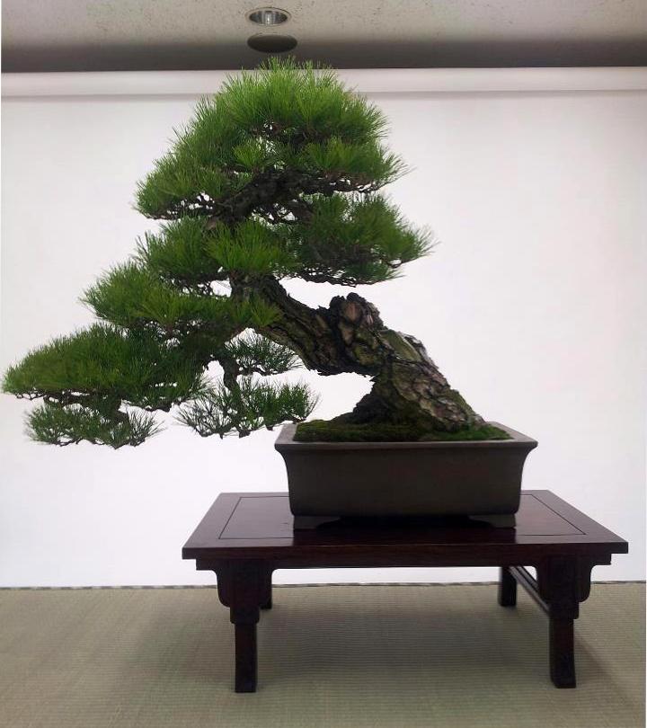 kokufu-ten 2013 - isao omachi 04