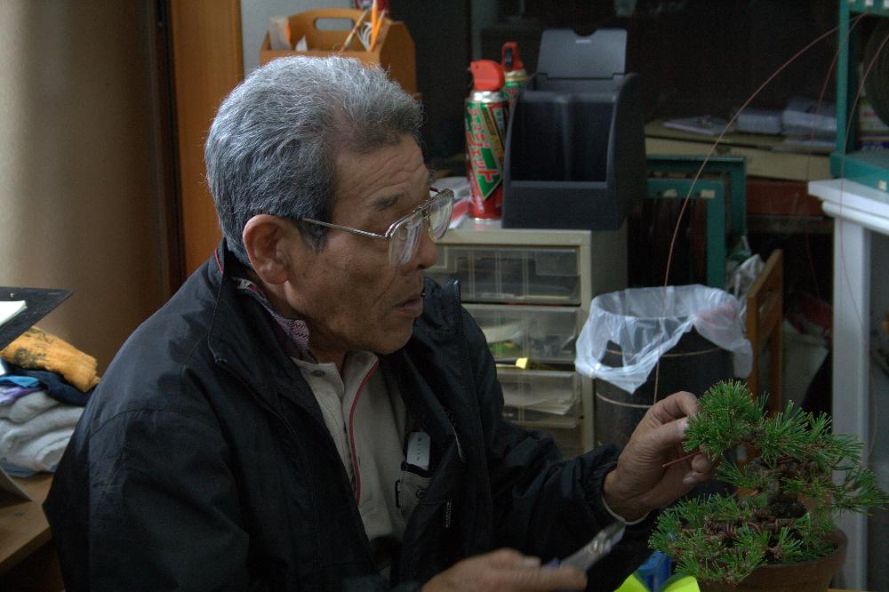 kuniaki hiramatsu - shunshoen kinashi bonsai 2011