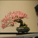 Web bonsai review #16 – february 2013
