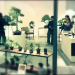 bonsai cafe exposition photo